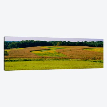 Field Of Corn Crops, Baltimore, Maryland, USA Canvas Print #PIM728} by Panoramic Images Canvas Print