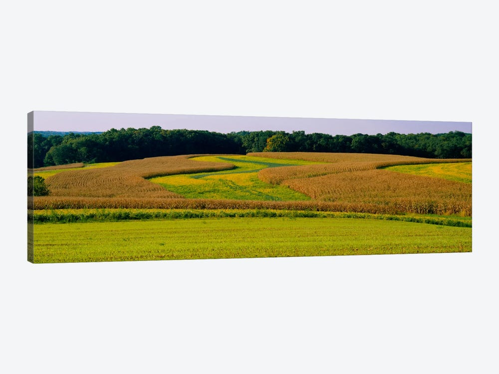 Field Of Corn Crops, Baltimore, Maryland, USA by Panoramic Images 1-piece Canvas Art Print