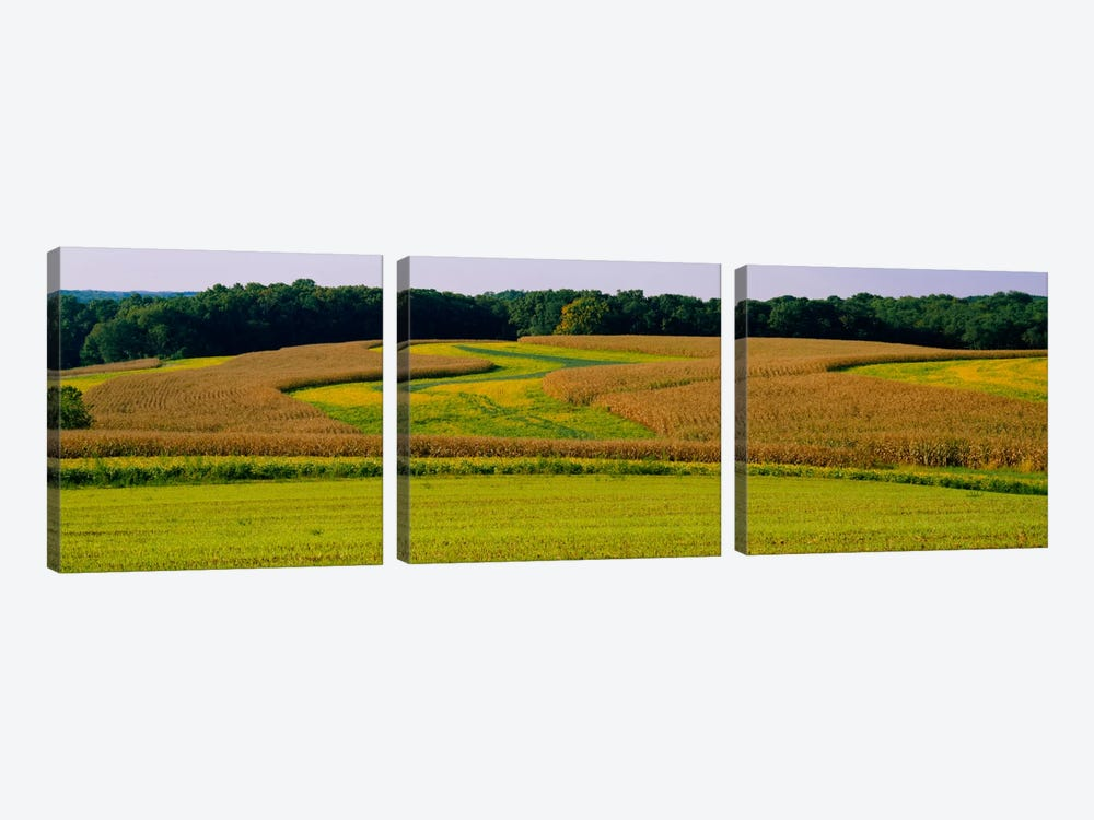 Field Of Corn Crops, Baltimore, Maryland, USA by Panoramic Images 3-piece Canvas Art Print