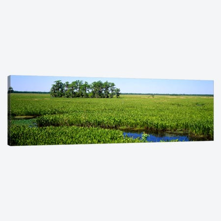 Plants on a wetland, Jean Lafitte National Historical Park And Preserve, New Orleans, Louisiana, USA Canvas Print #PIM733} by Panoramic Images Canvas Wall Art