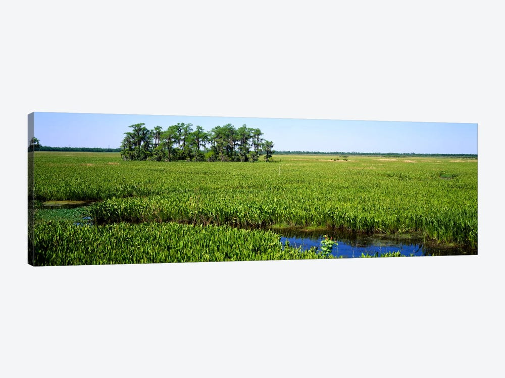 Plants on a wetland, Jean Lafitte National Historical Park And Preserve, New Orleans, Louisiana, USA by Panoramic Images 1-piece Canvas Art Print