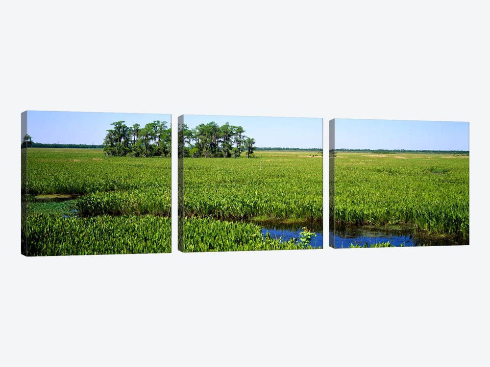 Plants on a wetland, Jean Lafitte National Historical Park And Preserve, New Orleans, Louisiana, USA by Panoramic Images 3-piece Art Print