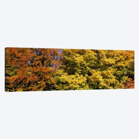 Autumnal trees in a park, Ludwigsburg Park, Ludwigsburg, Baden-Wurttemberg, Germany Canvas Print #PIM7357} by Panoramic Images Canvas Artwork