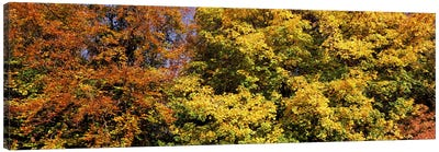 Autumnal trees in a park, Ludwigsburg Park, Ludwigsburg, Baden-Wurttemberg, Germany Canvas Art Print