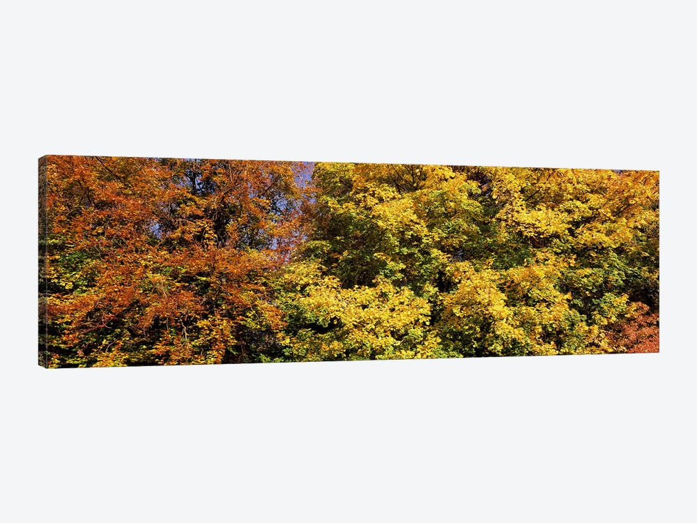Autumnal trees in a park, Ludwigsburg Park, Ludwigsburg, Baden-Wurttemberg, Germany by Panoramic Images 1-piece Canvas Artwork
