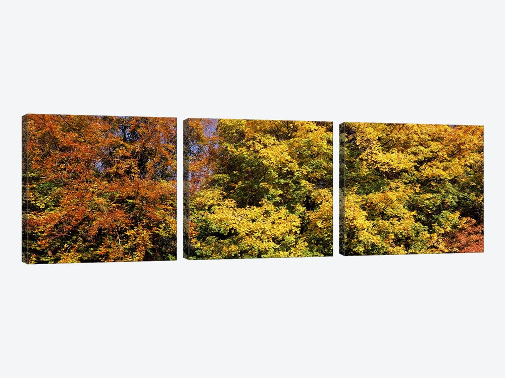 Autumnal trees in a park, Ludwigsburg Park, Ludwigsburg, Baden-Wurttemberg, Germany by Panoramic Images 3-piece Canvas Artwork
