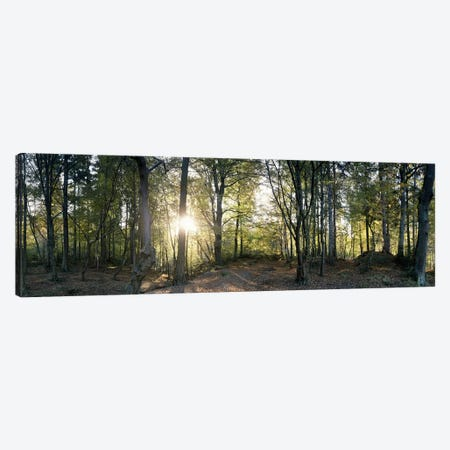 Trees in a forestBlack Forest, Freiburg im Breisgau, Baden-Wurttemberg, Germany Canvas Print #PIM7392} by Panoramic Images Canvas Print