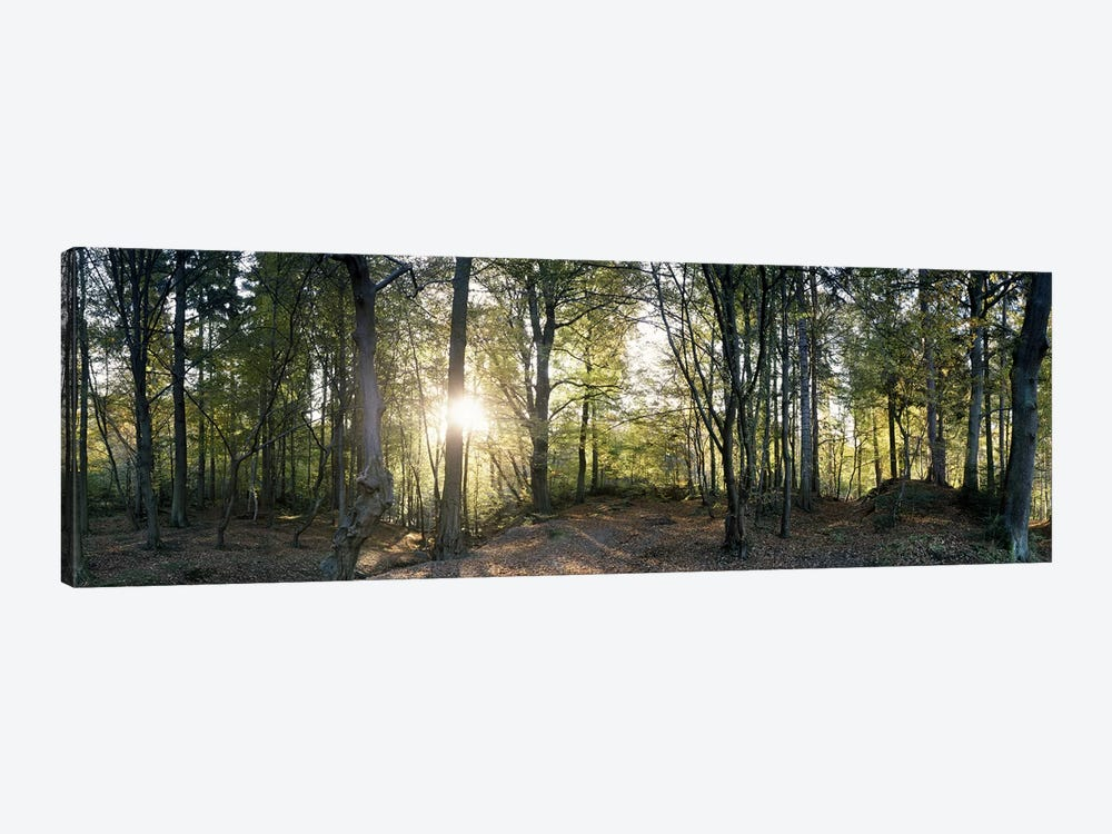 Trees in a forestBlack Forest, Freiburg im Breisgau, Baden-Wurttemberg, Germany 1-piece Canvas Print