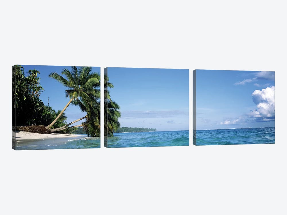 Leaning Palm Trees In A Tropical Landscape by Panoramic Images 3-piece Canvas Print