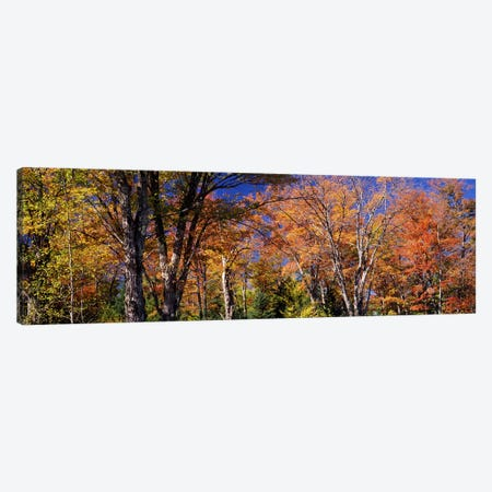 Trees in autumn, Vermont, USA Canvas Print #PIM7444} by Panoramic Images Canvas Wall Art