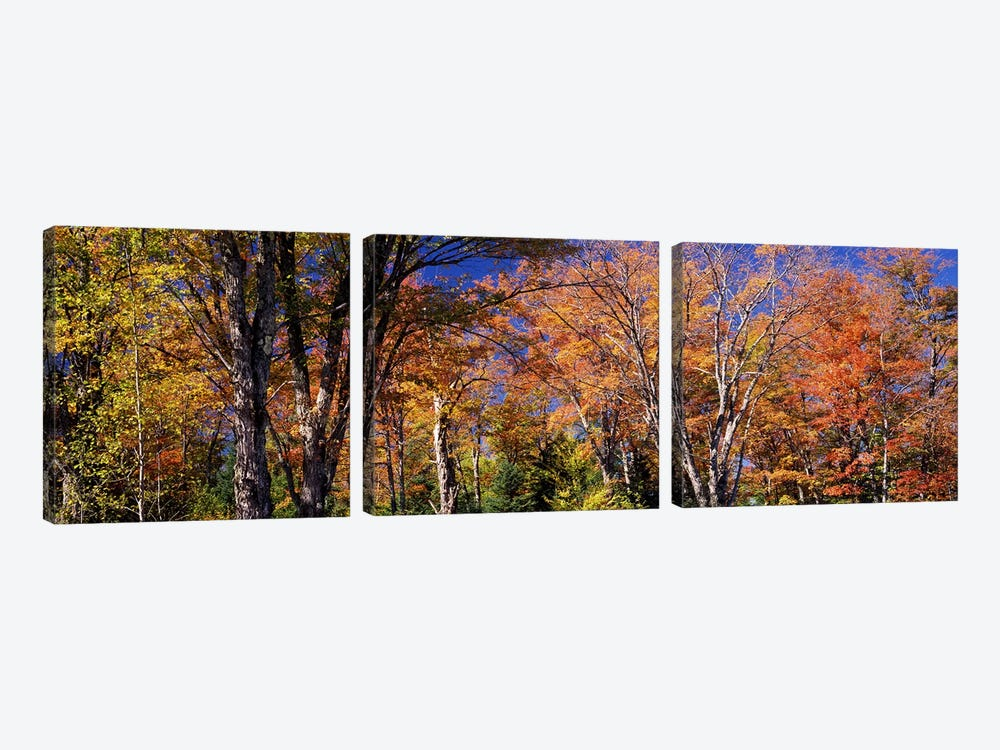 Trees in autumn, Vermont, USA by Panoramic Images 3-piece Canvas Art Print