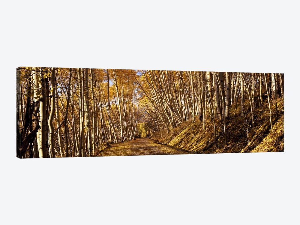 Road passing through a forest, Colorado, USA 1-piece Canvas Art