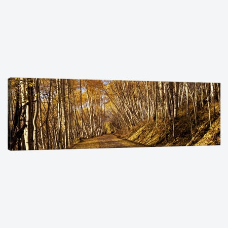 Road passing through a forest, Colorado, USA Canvas Print #PIM7463} by Panoramic Images Canvas Print