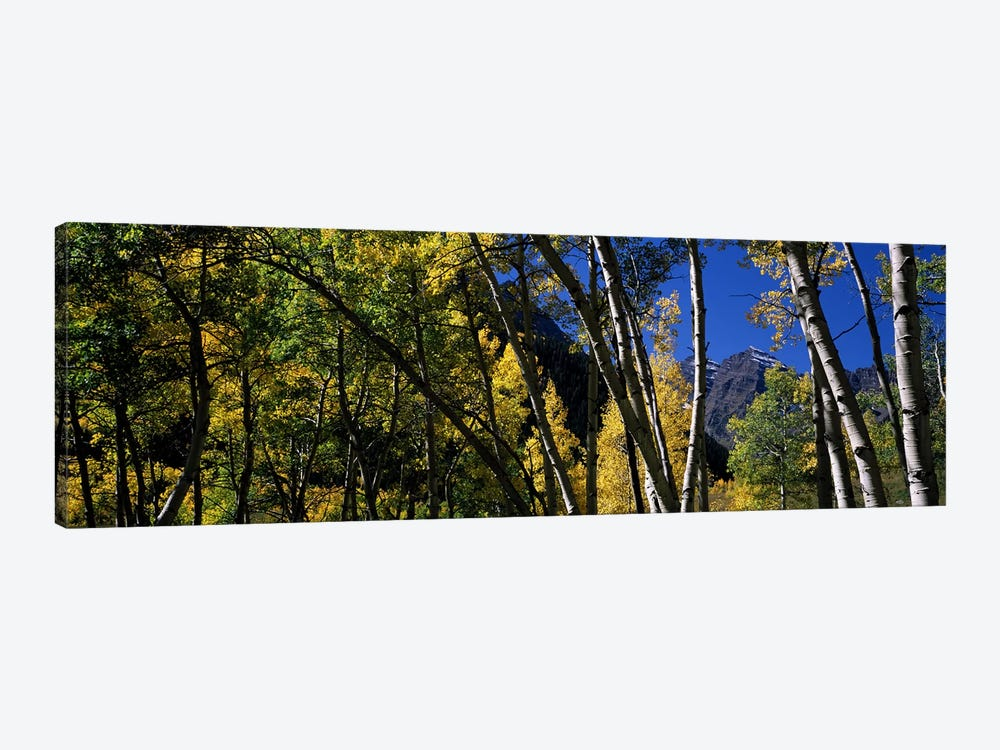 Aspen trees with mountains in the background, Maroon Bells, Aspen, Pitkin County, Colorado, USA by Panoramic Images 1-piece Canvas Wall Art