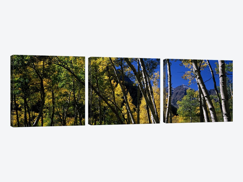 Aspen trees with mountains in the background, Maroon Bells, Aspen, Pitkin County, Colorado, USA by Panoramic Images 3-piece Canvas Wall Art