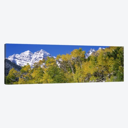 Forest with snowcapped mountains in the background, Maroon Bells, Aspen, Pitkin County, Colorado, USA Canvas Print #PIM7469} by Panoramic Images Canvas Art Print