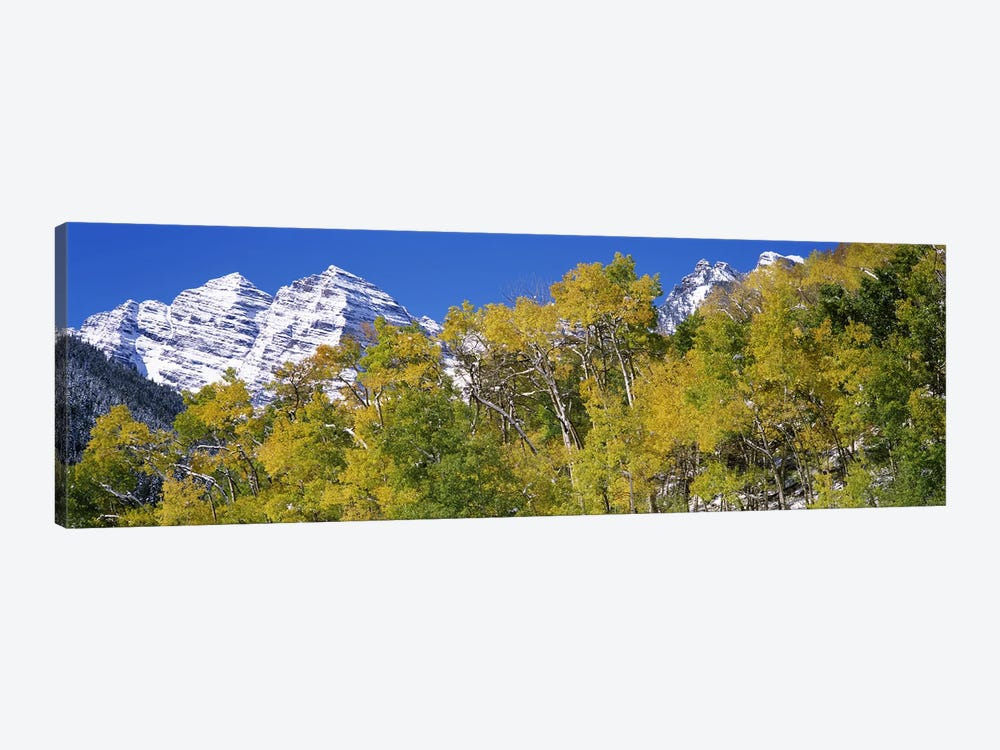 Forest with snowcapped mountains in the background, Maroon Bells, Aspen, Pitkin County, Colorado, USA by Panoramic Images 1-piece Canvas Artwork