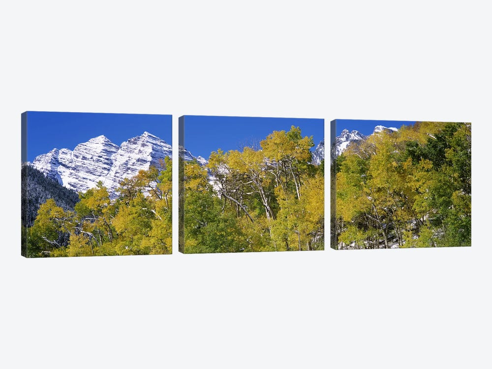 Forest with snowcapped mountains in the background, Maroon Bells, Aspen, Pitkin County, Colorado, USA 3-piece Canvas Wall Art