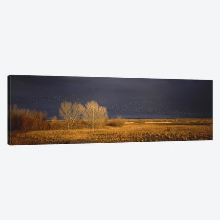 Flock of Snow geese flying, Bosque del Apache National Wildlife Reserve, Socorro County, New Mexico, USA #5 Canvas Print #PIM7491} by Panoramic Images Canvas Artwork