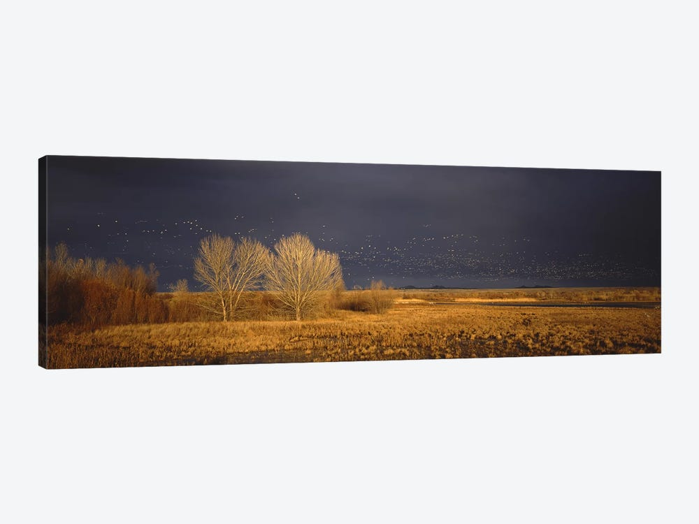 Flock of Snow geese flying, Bosque del Apache National Wildlife Reserve, Socorro County, New Mexico, USA #5 by Panoramic Images 1-piece Canvas Print