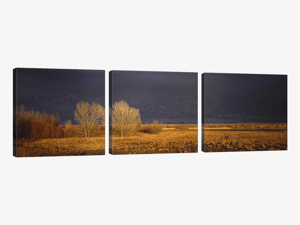 Flock of Snow geese flying, Bosque del Apache National Wildlife Reserve, Socorro County, New Mexico, USA #5 by Panoramic Images 3-piece Canvas Print