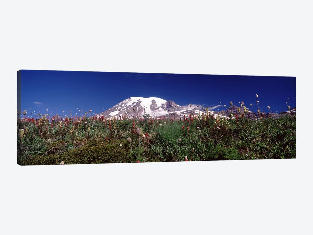 Wildflowers on mountains, Mt Rainier, Pierce County, Washington State, USA by Panoramic Images 1-piece Canvas Print