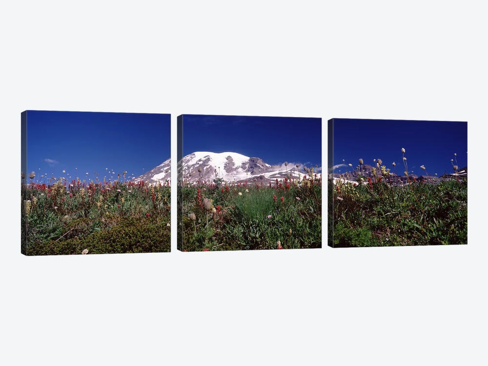 Wildflowers on mountains, Mt Rainier, Pierce County, Washington State, USA by Panoramic Images 3-piece Art Print
