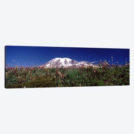 Wildflowers on mountains, Mt Rainier, Pierce County, Washington State, USA Canvas Print #PIM7543} by Panoramic Images Canvas Art