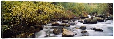 River passing through a forestInyo County, California, USA Canvas Print #PIM7551