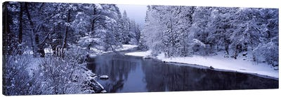 Snow covered trees along a river, Yosemite National Park, California, USA Canvas Art Print