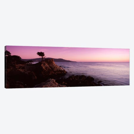 Coastal Landscape Featuring The Lone Cypress, Pebble Beach, Monterey County, California, USA Canvas Print #PIM7584} by Panoramic Images Art Print