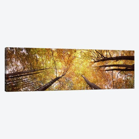 Low angle view of trees, Bavaria, Germany Canvas Print #PIM7586} by Panoramic Images Art Print
