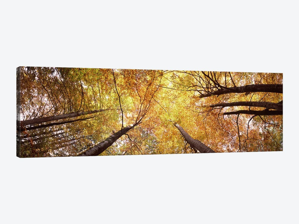 Low angle view of trees, Bavaria, Germany by Panoramic Images 1-piece Canvas Artwork