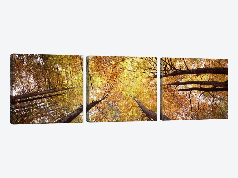 Low angle view of trees, Bavaria, Germany by Panoramic Images 3-piece Canvas Wall Art