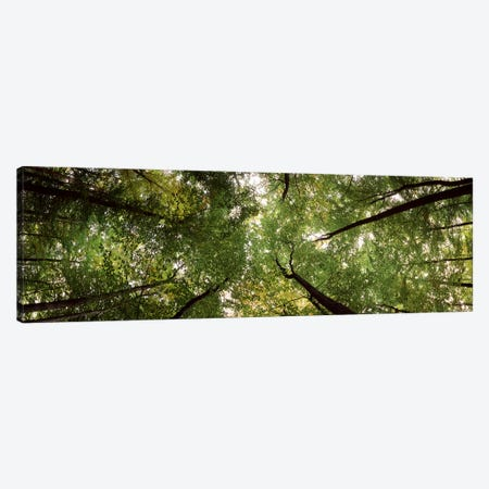 Low angle view of trees, Bavaria, Germany #2 Canvas Print #PIM7587} by Panoramic Images Canvas Print