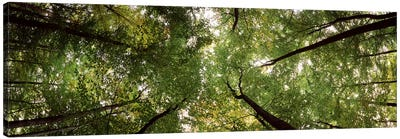 Low angle view of trees, Bavaria, Germany #2 Canvas Art Print