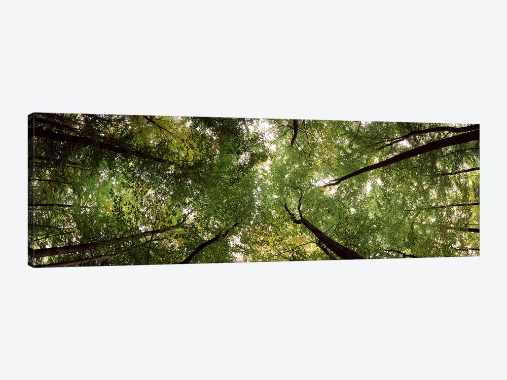 Low angle view of trees, Bavaria, Germany #2 1-piece Canvas Art Print