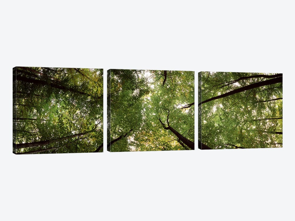 Low angle view of trees, Bavaria, Germany #2 by Panoramic Images 3-piece Canvas Art Print