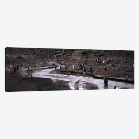 Penguins make their way to the colonyBaily Head, Deception Island, South Shetland Islands, Antarctica 3-Piece Canvas #PIM7608} by Panoramic Images Art Print