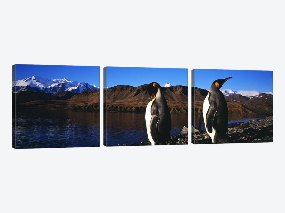 Close-Up Of Two King Penguins, King Edward Point, South Georgia Island by Panoramic Images 3-piece Art Print