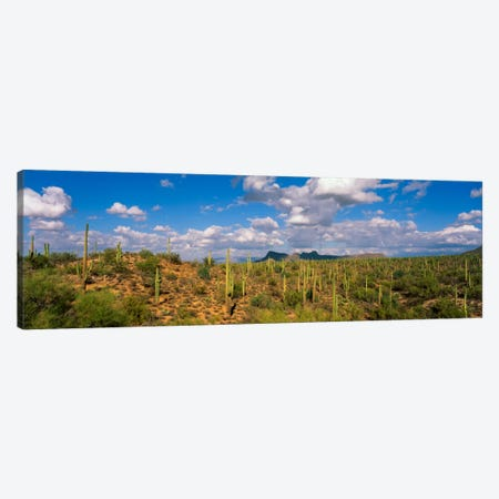 Saguaro National Park Tucson AZ USA Canvas Print #PIM761} by Panoramic Images Art Print