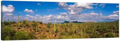 Saguaro National Park Tucson AZ USA Canvas Print #PIM761