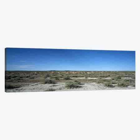 Herd of springboks (Antidorcas marsupialis) grazing in a landscapeEtosha National Park, Kunene Region, Namibia Canvas Print #PIM7626} by Panoramic Images Canvas Artwork