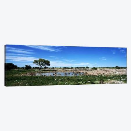 Wild animals at a waterholeOkaukuejo, Etosha National Park, Kunene Region, Namibia Canvas Print #PIM7641} by Panoramic Images Art Print