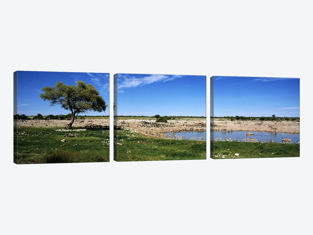 Wild animals at a waterholeOkaukuejo, Etosha National Park, Kunene Region, Namibia by Panoramic Images 3-piece Canvas Artwork