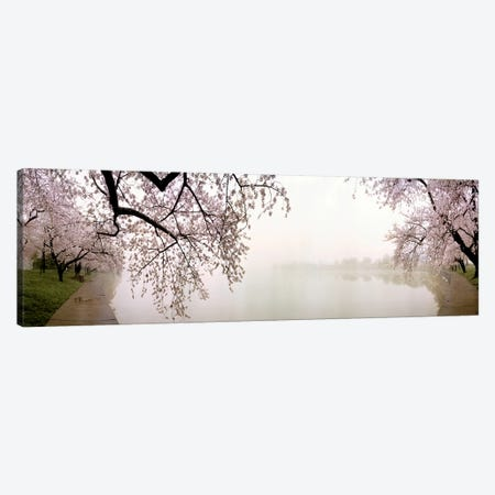 Cherry blossoms at the lakesideWashington DC, USA Canvas Print #PIM7662} by Panoramic Images Canvas Art Print