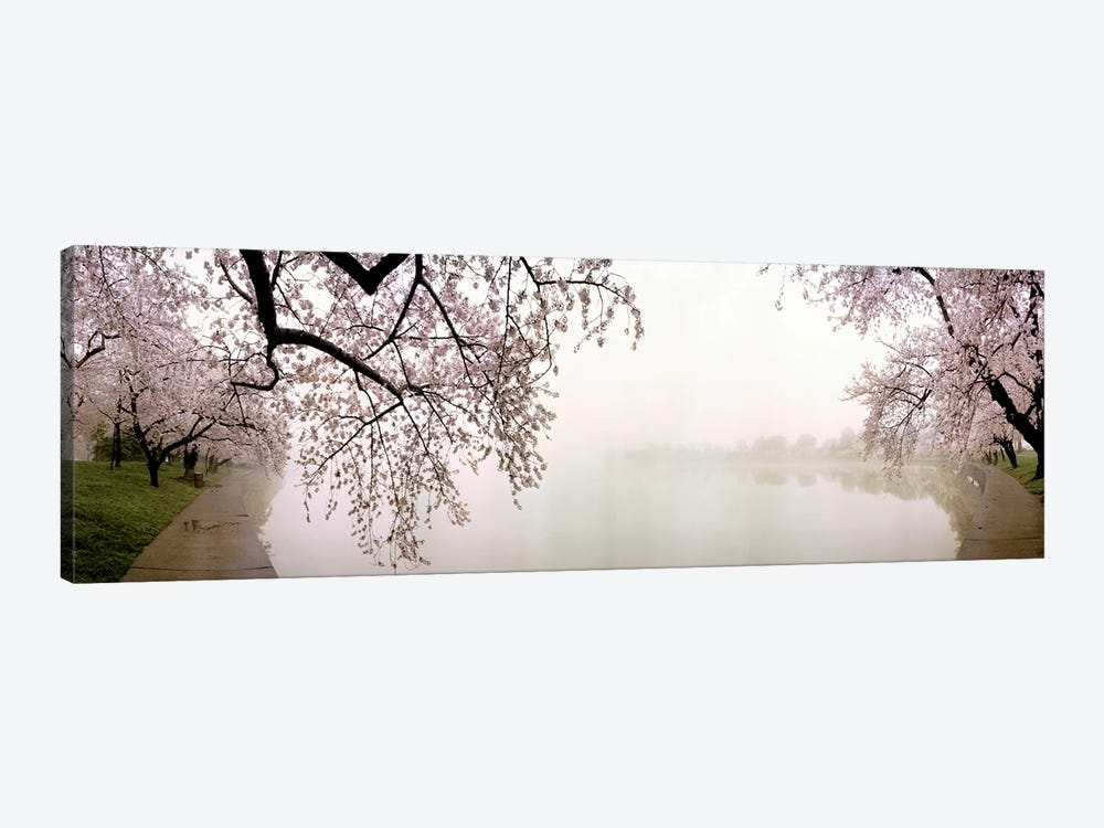Cherry blossoms at the lakesideWashington DC, USA by Panoramic Images 1-piece Canvas Artwork