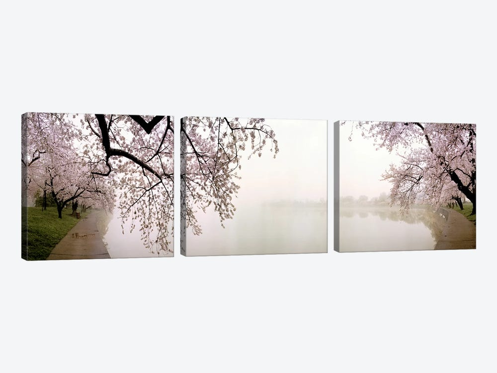Cherry blossoms at the lakesideWashington DC, USA by Panoramic Images 3-piece Canvas Wall Art