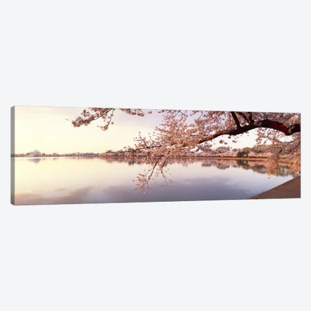 Cherry blossoms at the lakeside, Washington DC, USA Canvas Print #PIM7663} by Panoramic Images Art Print