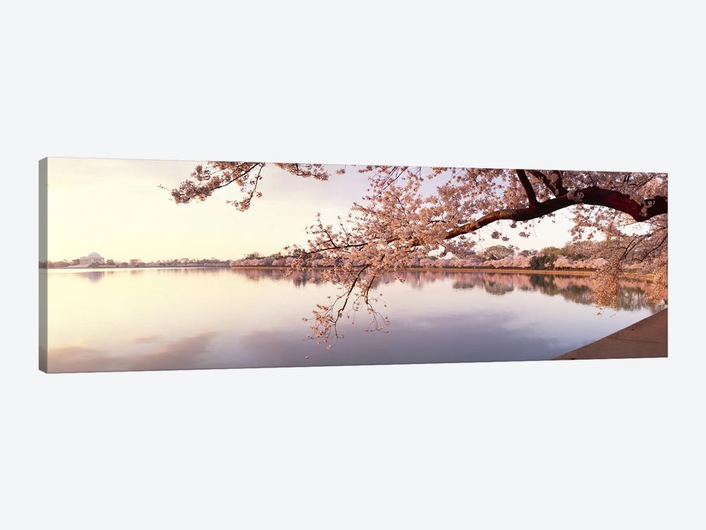 Cherry blossoms at the lakeside, Washington DC, USA by Panoramic Images 1-piece Canvas Print